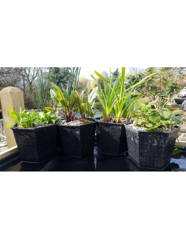 UK Native Pond Plants