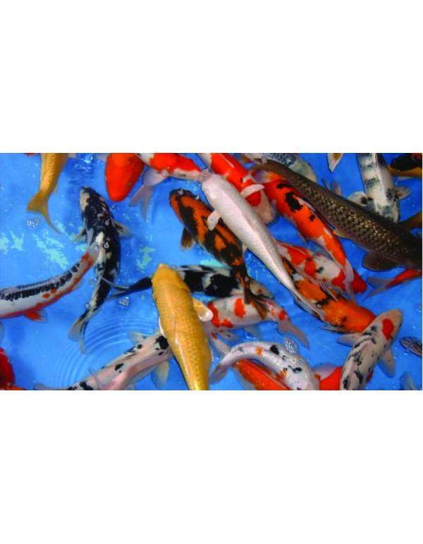 Fish Sales Clarification - Covid-19