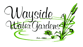 Wayside Water Gardens